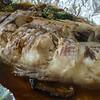 P1050538 fish copy2