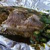 P1050543 fish copy2