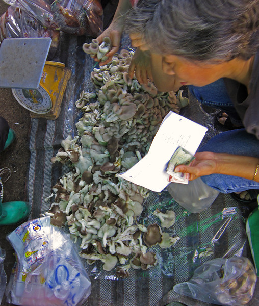 Wild mushrooms offered in the market
