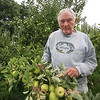 Owner Keith Bohne of Drew Farm in Westford, which is having a great year for apple harvest. These are Golden Delicious apples. (SUN/Julia Malakie)