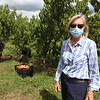 Owner Ann Harris at Autumn Hills Orchard in Groton, which currently has pick your own raspberries and apples (two varieties ready), and is harvesting peaches (rear).  (SUN/Julia Malakie)