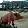The concrete pig at Danny Edward's Famous Kansas City Barbecue joint, just before it was closed and demolished. The new Sprint Center is under construction in background.