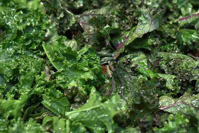 beet latkes and kale chips