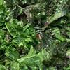 verdant lush kale