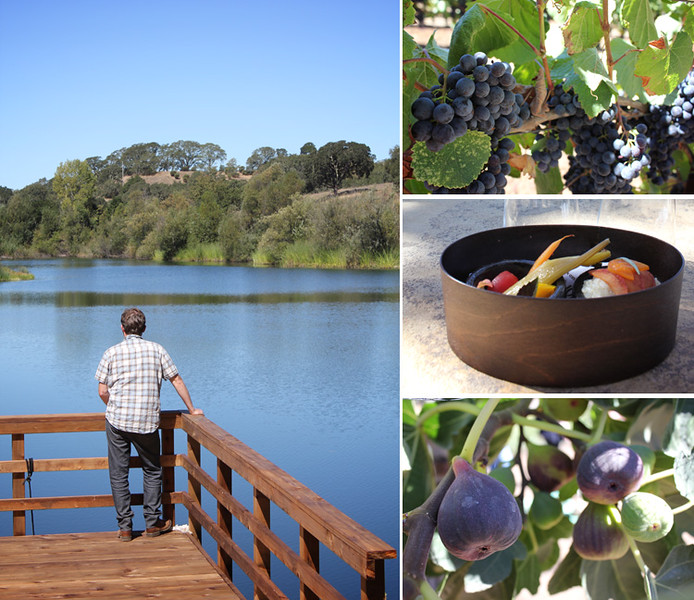 LakeView-Fruit-Collage