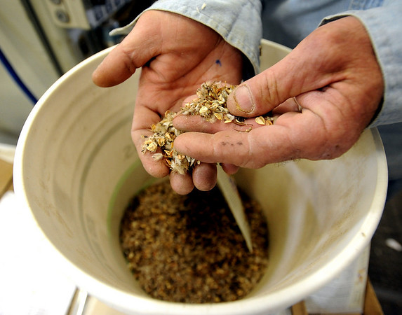 Pat Mercer checks to see if the quantities are correct for the variety package.<br /> Botanical Interests Seeds process a variety of seed packets at their Broomfield location.<br /> Cliff Grassmick / February 25, 2010