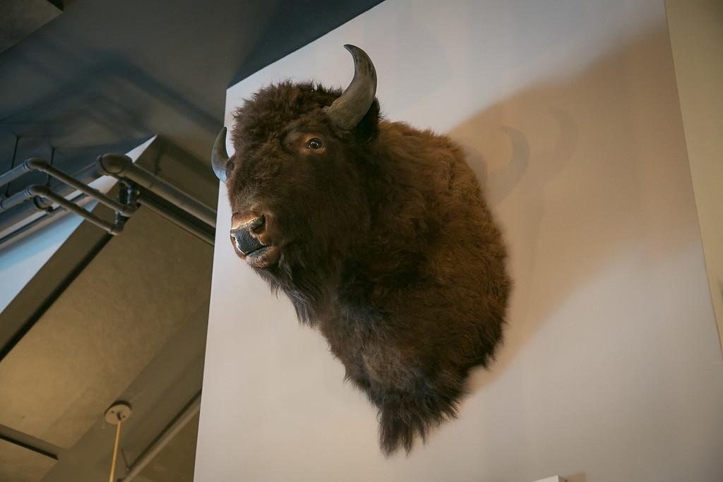 Bauer1009_Buffalo