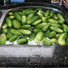 "A bushel of cukes - 1/2 was ""quick pickled"" in a hot brine, the other 1/2 was fermented for 2.5 weeks and then hot brine canned."