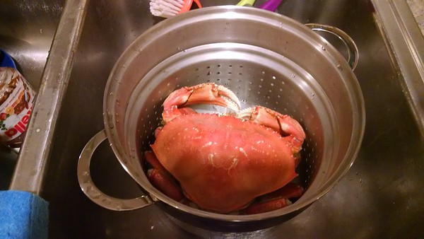 2014-09 Dungeness Crab