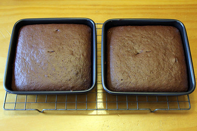 Chocolate sponge cakes hot out of the oven.