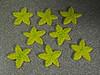 Bright Starfish