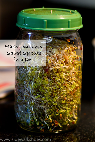 Make your own salad sprouts in a jar!  So easy and so tasty! www.sidewalkshoes.com