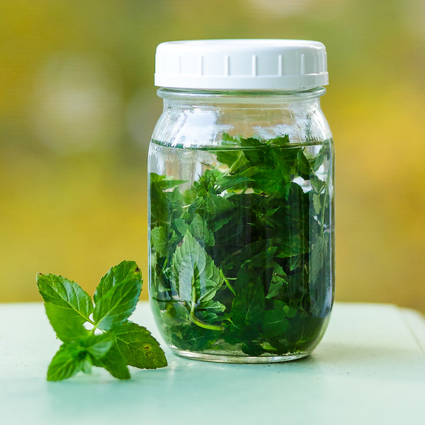 Glass jar filled with mint leaves and vodka.