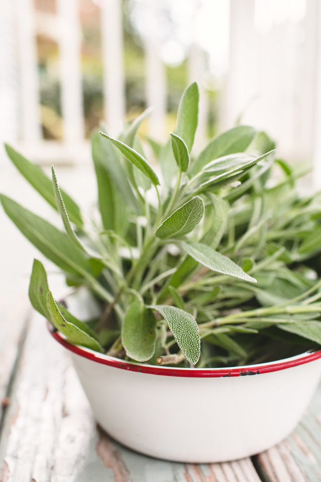 White enameled bowl with fresh sage