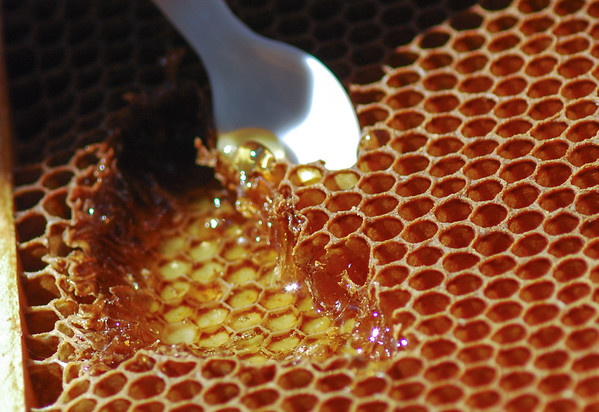 Eating straight from the bees' honeycomb