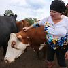 Owner Anna Corey of Dracut with Ursula, one of her Hereford cows, at Corey Pride Farm in Dracut, which raises grass-fed beef and free-range chickens. (SUN/Julia Malakie)