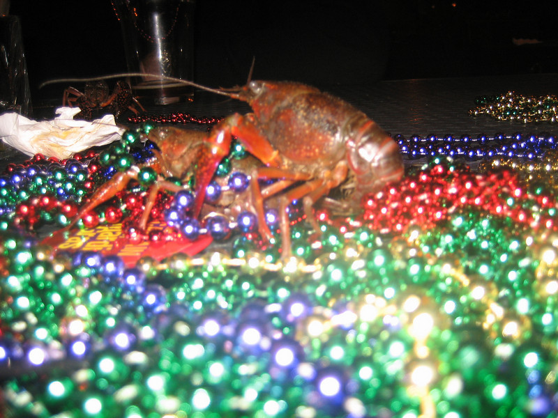 """Party Gras! Kit and I again did a crawfish boil. This time it was for <a href=""""http://cousinbug.smugmug.com/gallery/4300899_rUBfv"""">BBC's 2008 Mardi Gras Party and you will find that gallery over here.</a>"""