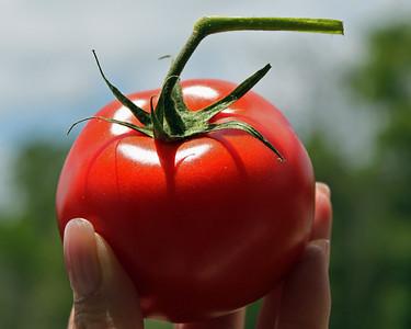 Holding the Tomato By: Kimberly Marshall