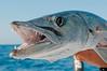 Edible_fish-197