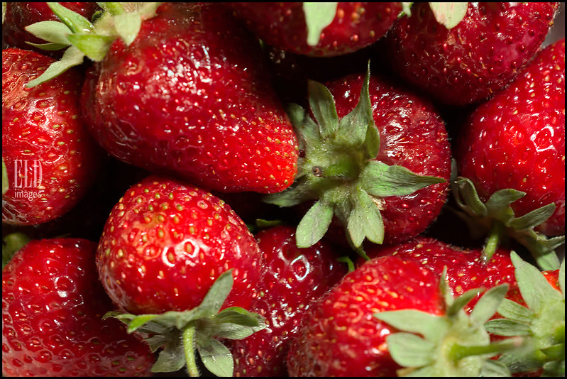 Skagit Strawberries
