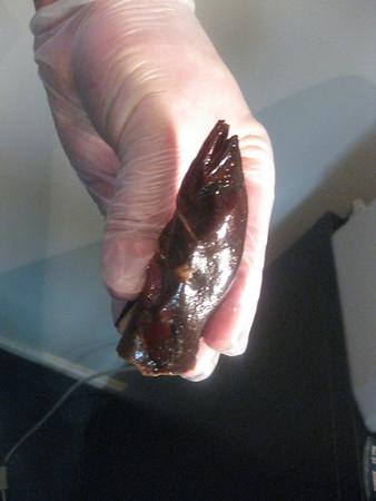 eel head