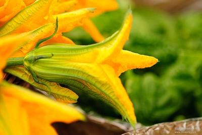 Squash flower (1)