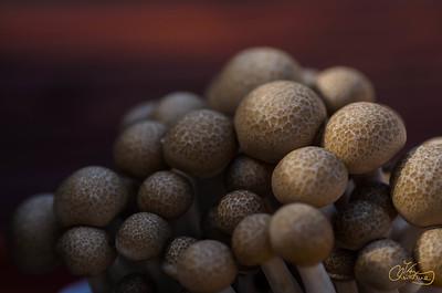 Mushroom_0012
