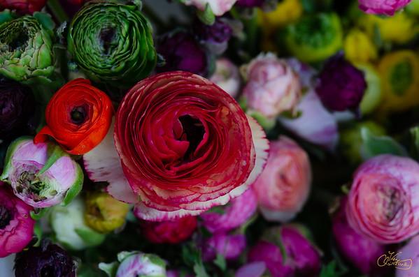 colored ranunculus