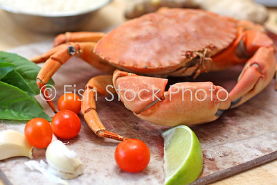 Pacific Rock Crab