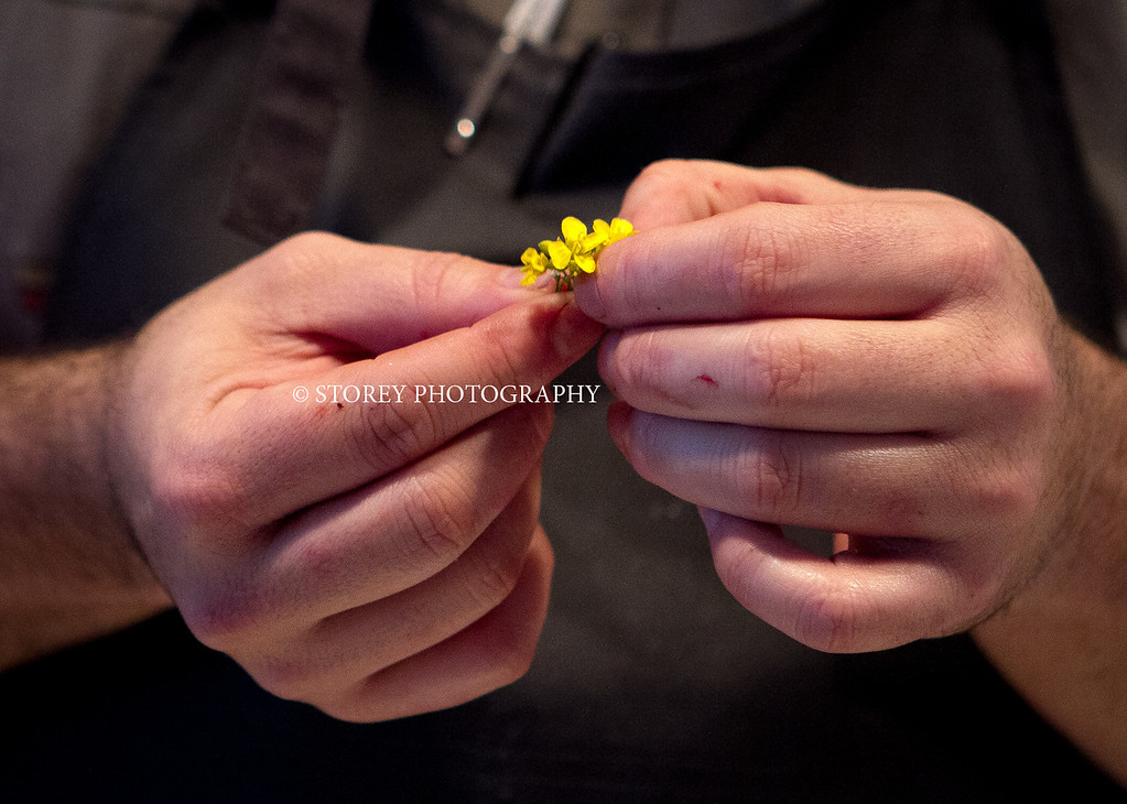 Chef Mark Liberman prepares a flower for the Cauliflower appetizer at AQ Restaurant in San Francisco, Calif., on Thursday, January 5th,  2012.