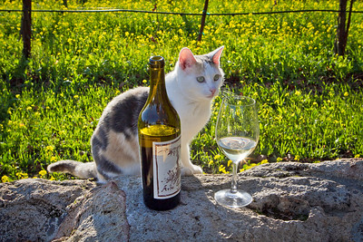 """""""Viachina"""" sits next to the wine of Arbe Garbe Winery in a vineyard in Rutherford, Calif., on Friday, December 16th,  2011."""