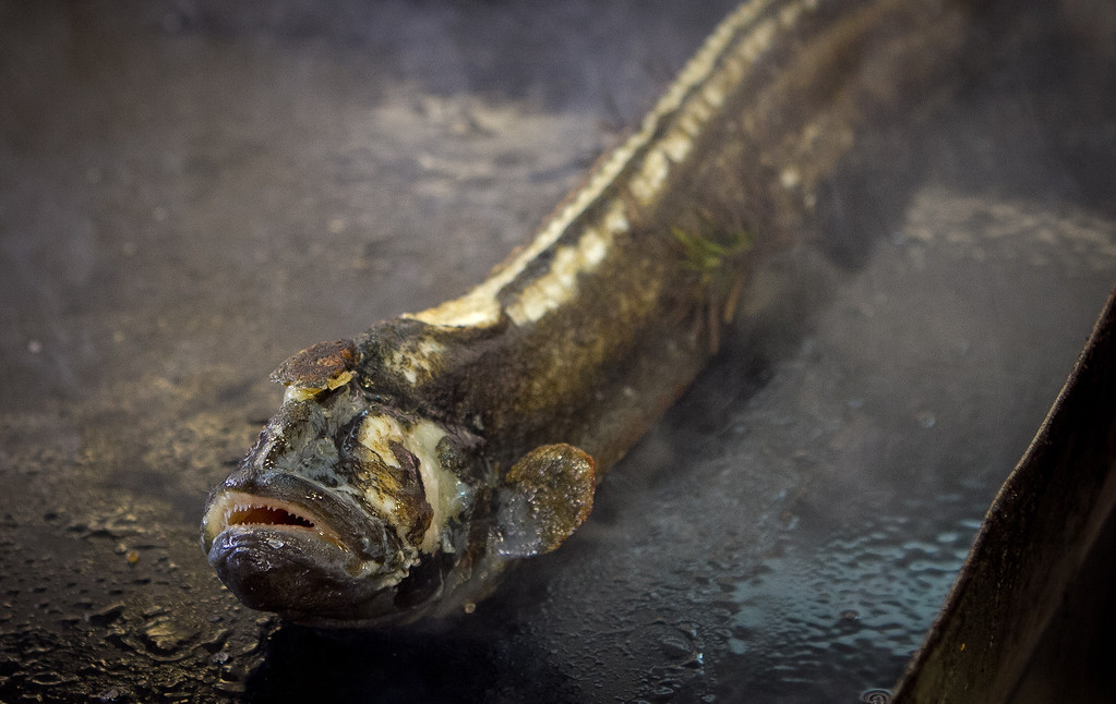 The Monkey Face Eel on the flat top at Mateo's Cocina Latina in Healdsburg, Calif., on Sunday, February 26th, 2012.