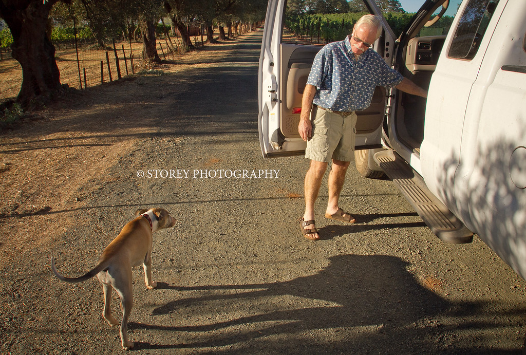 """Randy Dunn coaxes his dog """"Dominga"""" into his truck at his vineyard in Angwin, Calif., on Thursday, August 16th, 2012."""