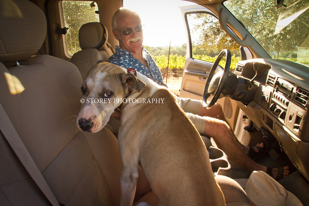 """Randy Dunn in his truck with his dog """"Dominga""""at his vineyard in Angwin, Calif., on Thursday, August 16th, 2012."""