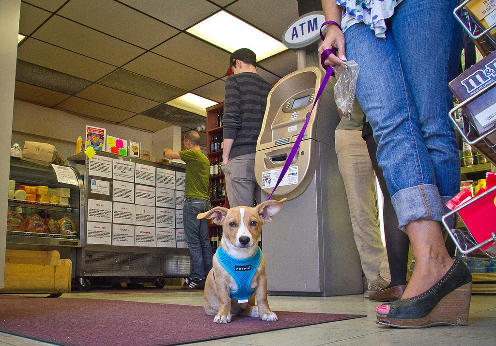 A dog and her owner wait for a sandwich at Rhea's Deli in San Francisco, Calif., on Wednesday,  June 6th, 2012.