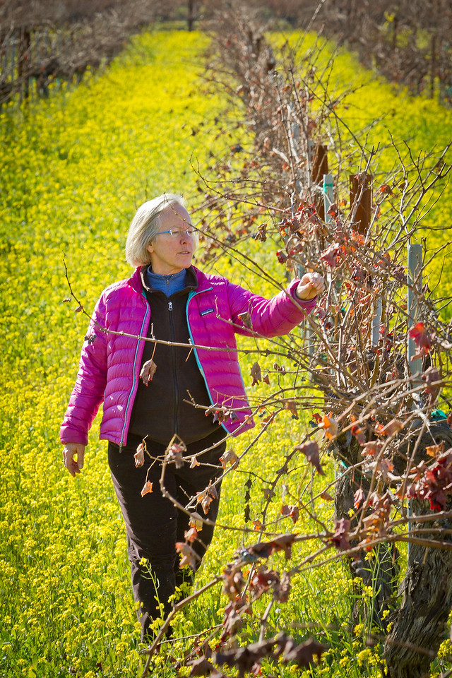 Winemaker Cathy Corison tries some grapes from her Cabernet vineyard behind her winery in St. Helena, Calif., on Friday, December 16, 2011.