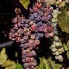Merlo Grapes