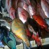 Dominica Fish Market- Caribbean