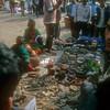 Kathmandu Drug Store, animal bones, tiger skulls, what ever ails you we have a cure.