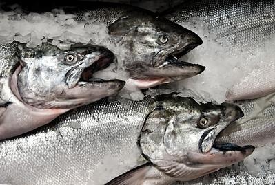Three Blackmouth Salmon on ice