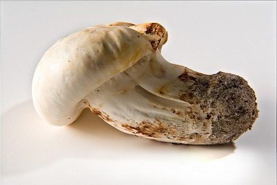 Matsutake mushroom grade #1