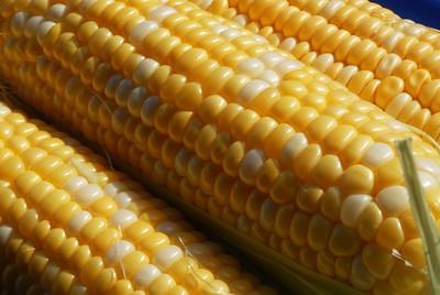 Food_corn_20070721_0007_pp