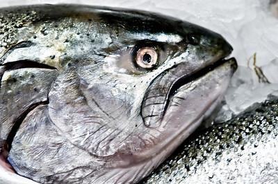 Blackmouth Salmon on Ice