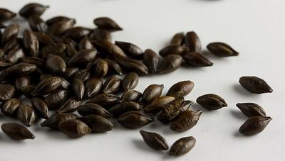 Chocolate Malted Barley