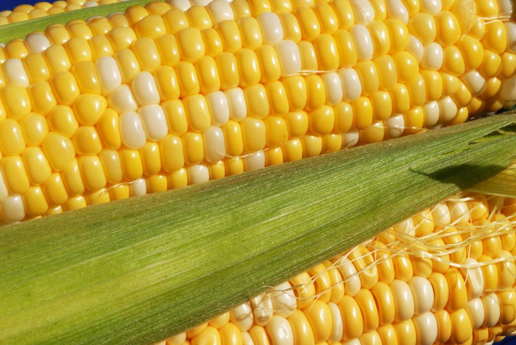 Food_corn_20070721_0017_pp