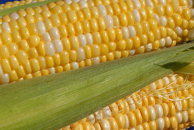 Food_corn_20070721_0017