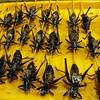 Lots of bugs!  Beijing night market