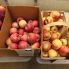 Chad Spiczka sells fresh produce on Saturdays and Sundays through the winter at the former Kirk farm at Wyman Road and Nashua Road in Groton. From left, Cortland, Empire and Fuji apples from Flat Hill Orchards in Lunenburg, and Bosc pears from Western Mass. (SUN/Julia Malakie)
