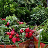 Produce,lettuce,radishes,cilantro,scallions,onions,healthy