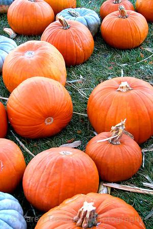 Pumpkins To Go
